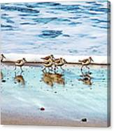 Shorebirds Canvas Print