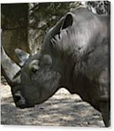 Side Profile Of A Large Rhinoceros With Two Horns  Canvas Print