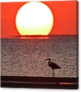 Silhouette Of Great Blue Heron Ardea Canvas Print