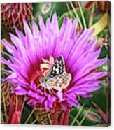Skipper On Cactus Bloom Canvas Print