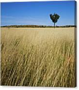 Small Single Tree In Field Canvas Print