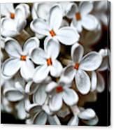 Small White Flowers Digital Canvas Print