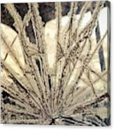 Smashed Window Canvas Print