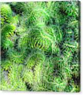 Snake Cactus Canvas Print