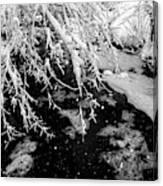 Snow Pa 10-013 Canvas Print