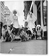 Soho Sheep Dogs Canvas Print