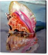 Solitary Conch Canvas Print
