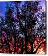 Sonoran Sunrise Ironwood Silhouette Canvas Print