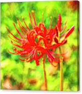 Spider Lily Cezanne Canvas Print