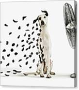 Spots Flying Off Dalmation Dog Canvas Print