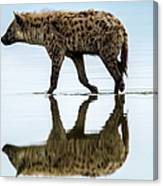 Spotted Hyena Looking For Weak Flamingos Canvas Print
