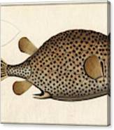 Spotted Trunk Fish  Canvas Print