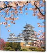 Spring Cherry Blossoms And The Main Canvas Print