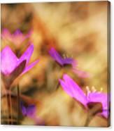 Spring Wild Flower 4 Canvas Print
