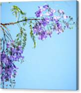 Springtime Beauty Canvas Print