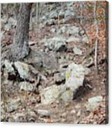 Steep Trails Canvas Print