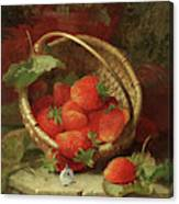 Still Life Of Strawberries With A Cabbage White Butterfly Canvas Print
