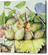 Still Life With Plums, Walnuts And Jasmine Canvas Print