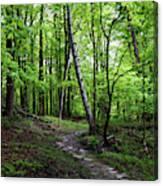 Stone Path with Birch Canvas Print