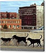 Stray Dogs Stroll Along The Bruckner Canvas Print