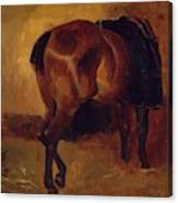 Study For Bay Horse Seen From Behind Canvas Print
