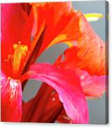 Summer Lilly Pink Canvas Print
