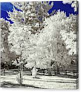 Summer Park In Infrared Canvas Print