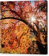 Sun Peaking Through The Autumn Colors  Canvas Print
