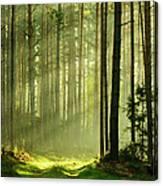 Sunbeams Breaking Through Pine Tree Canvas Print