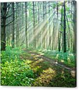 Sunbeams Filtering Through Trees On A Canvas Print