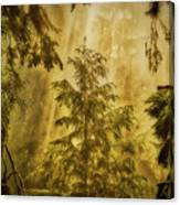 Sunbeams In The Foggy Forest #3 Canvas Print