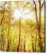 Sunbeams In The Forest Canvas Print
