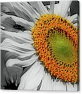 Sunflower And Shy Friend Canvas Print