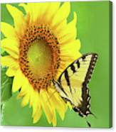 Sunflower And Swallowtail Canvas Print