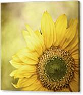 Sunflower Blossom With Bokeh Background Canvas Print