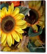 Sunflower Harvest Canvas Print