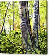 Sunlight Breaking Through Canvas Print