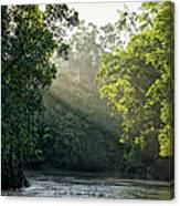 Sunlight Shining Through Trees On River Canvas Print