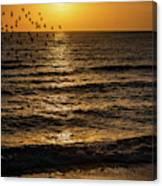 Sunrise Birds Nc Canvas Print
