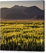 Sunset Over Wheat Canvas Print