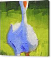 Sunshine Goose Canvas Print