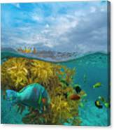 Surf Parrotfish, Damselfish And Basslet Canvas Print