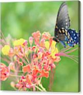 Swallowtail Butterfly Wings  Canvas Print