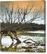 Swamp And Dead Tree Canvas Print