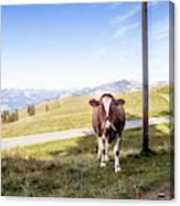 Swiss Cow Canvas Print