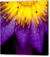 Symmetrical Lotus For Conceptual Photo Canvas Print