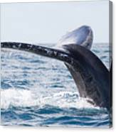 Tail Of Whalewhale Show The Tail Above Canvas Print