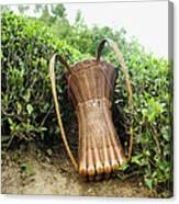 Tea Pickers Basket Canvas Print