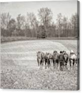 Team Of Six Horses Tilling The Fields Canvas Print