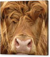Telephoto View Of The Face Of A Canvas Print